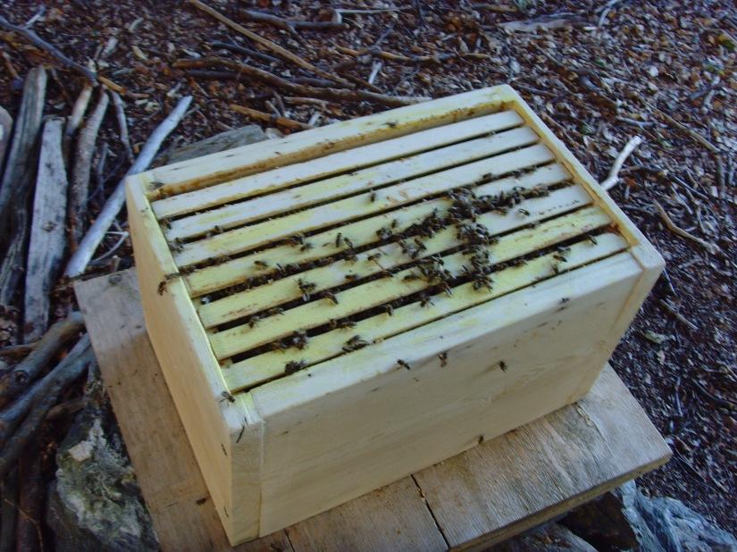 Realita včelařova III