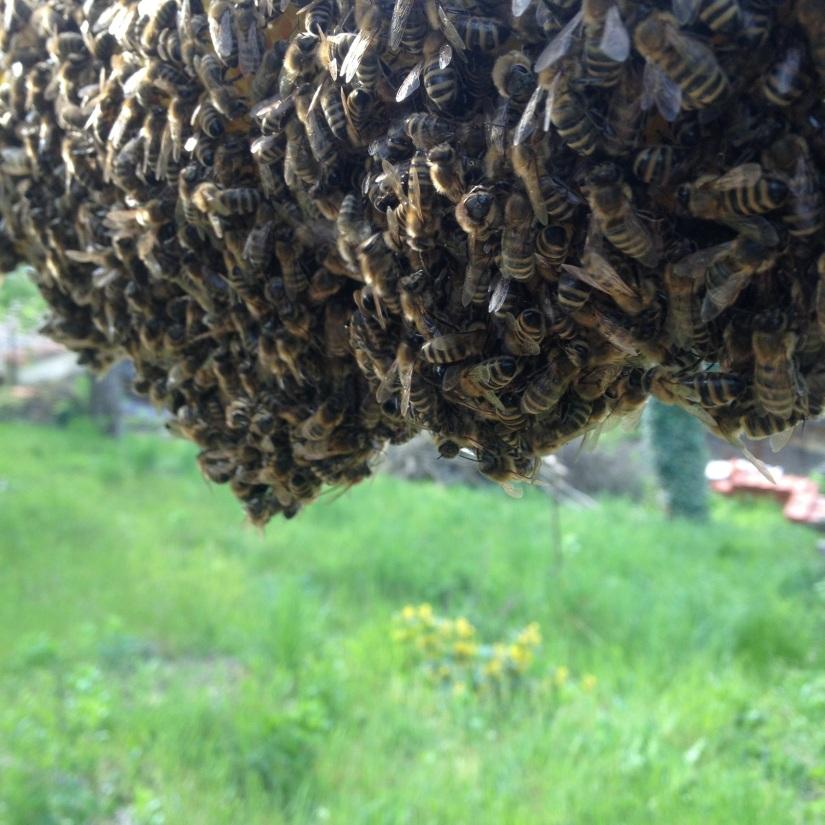 Uletěly včely – radujmese